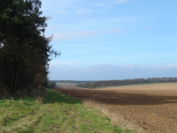 Field edge near Barnham