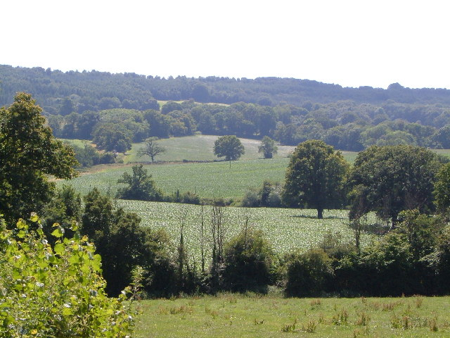 Northern slopes of Blackdown Hills from Angersleigh