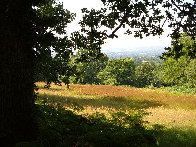 Woodland meadow near Farm Wood Bungalow