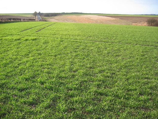 Farmland along the A1079