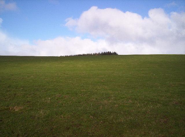 Grassy Field on Drumbeg