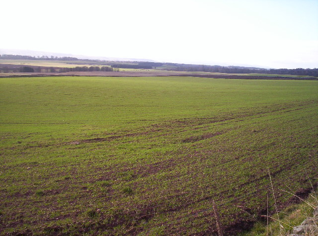 Fields Near Shandford