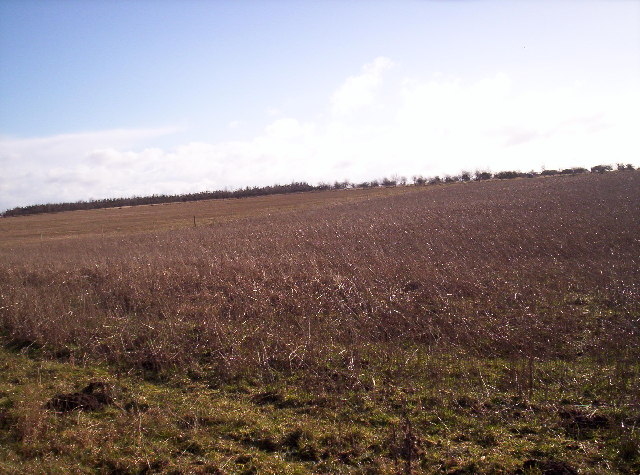 Field and Saplings near North Wood