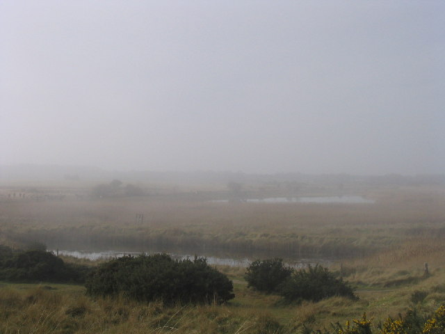 Minsmere in the mist