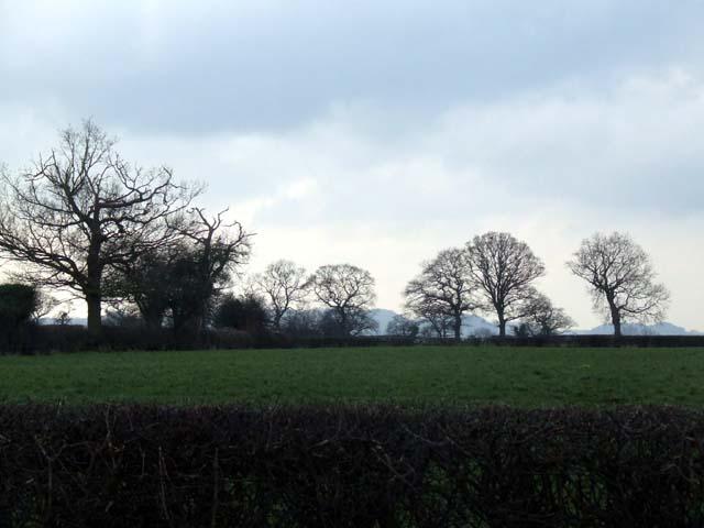 Fields near Clotton