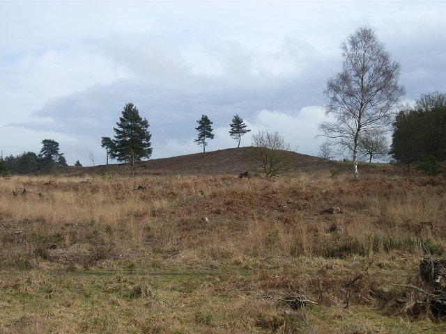 Looking east from Wishmoor Bottom