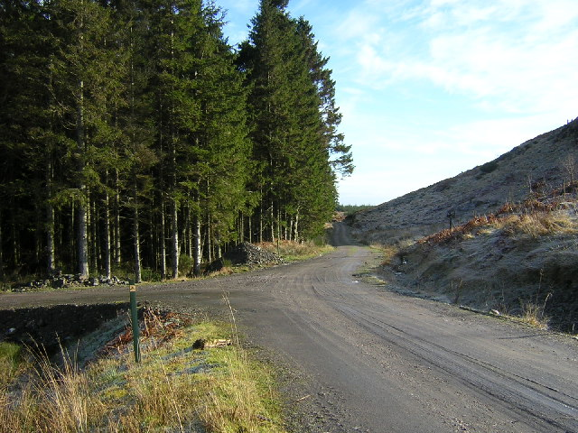 Tracks in Loch Ard Forest