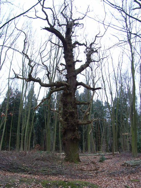 Woodland, Swinley Park
