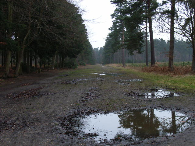 Windsor Ride, Swinley Park