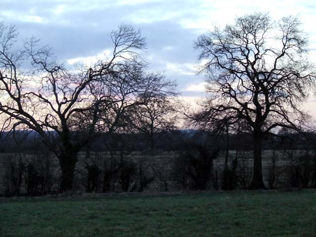 trees bordering the field