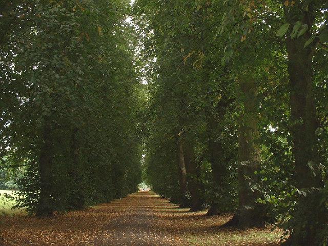 Beddington Park pathway to boating lake