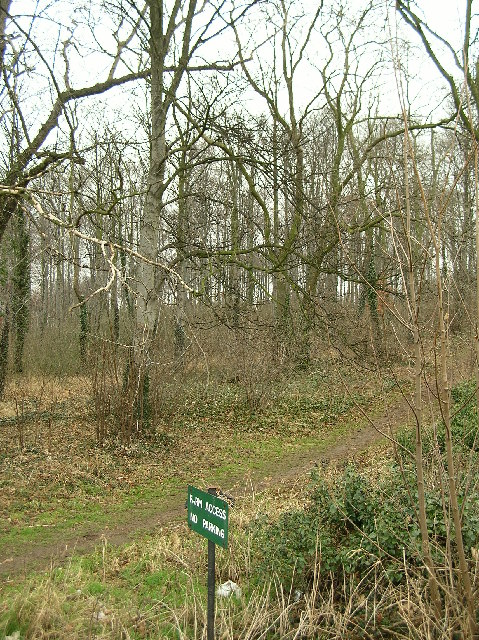 Wood (Plantation) off Newfield Lane