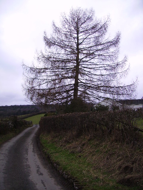 Larch The Howe