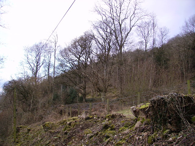 Woodland Witherslack