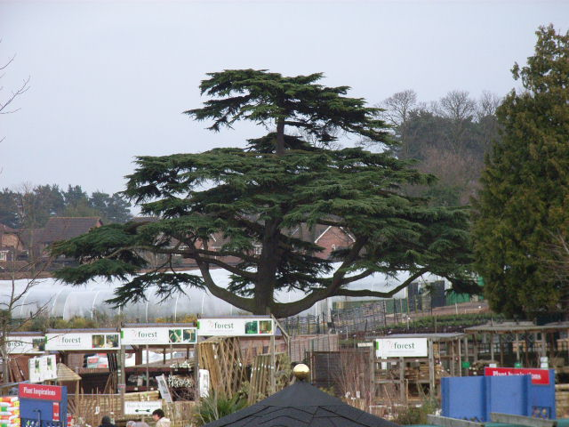 Notcutts Garden Centre, Bagshot