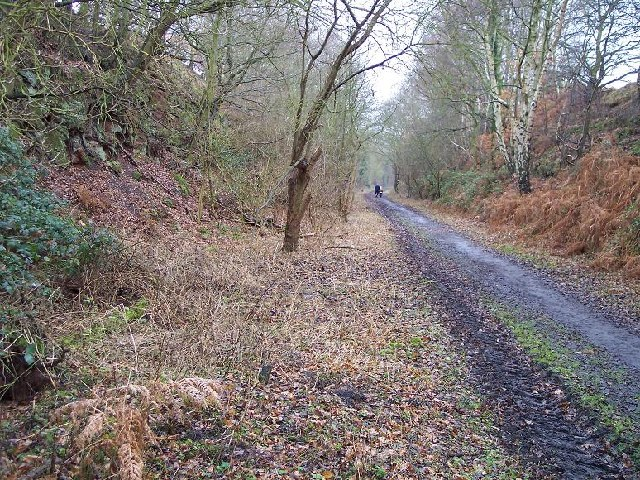 Disused railway cutting, Blackbrook Wood, Shepshed, Leicestershire