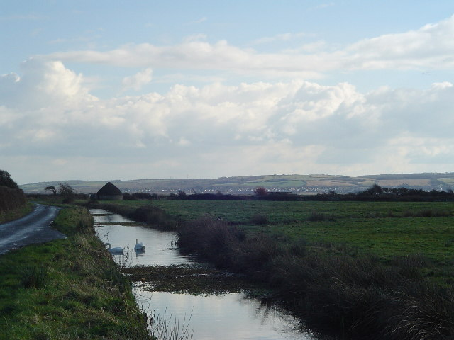 Braunton Marshes  and swans