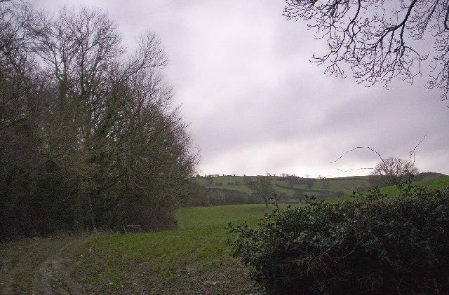 Copse near Betws-yn-Rhos