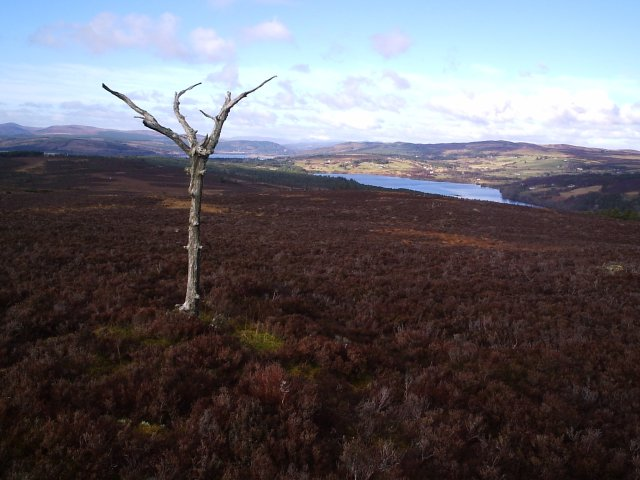 Looking NW towards Loch Migdale