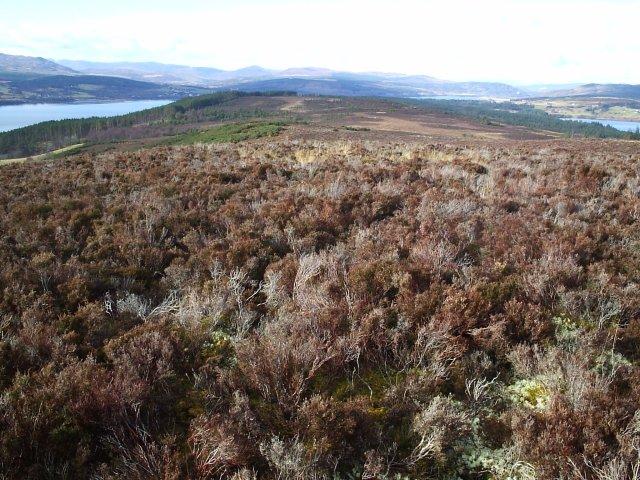 Dornoch Firth and Loch Migdale