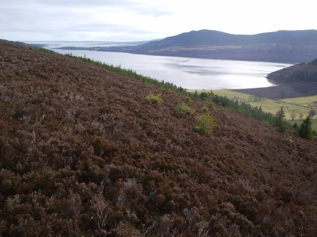 Looking East towards Tain and the Dornoch Firth