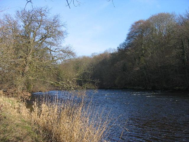 River Ure and Upbank Wood near Masham