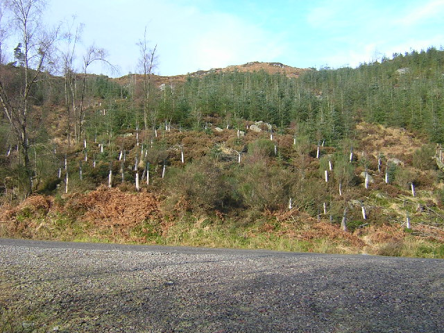 Replanting in Loch Ard Forest
