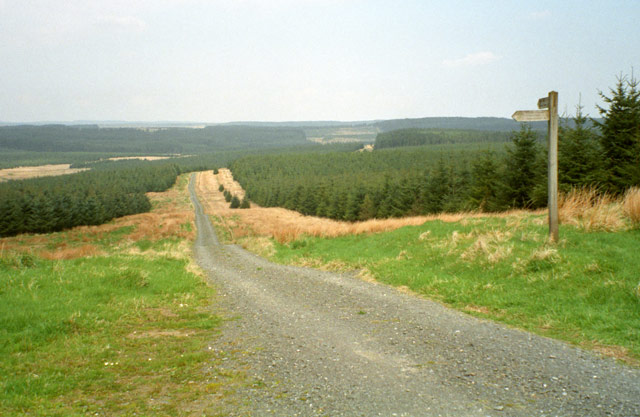 Track into Wark Forest