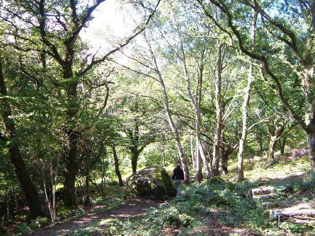 Lustleigh Cleave near Heaven's Gate