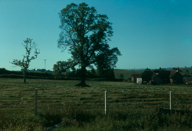 Knathorn Farm home paddock : hay-making time