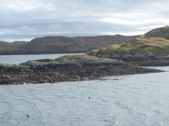Seal Colony at the entrance to South Harbour, Scalpay