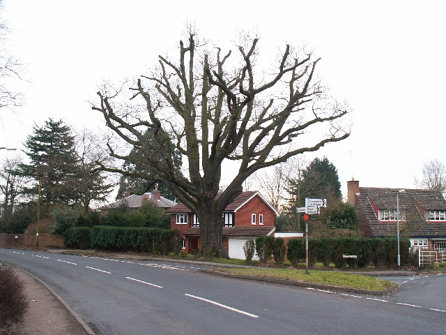 Oak tree at road junction, Barnt Green