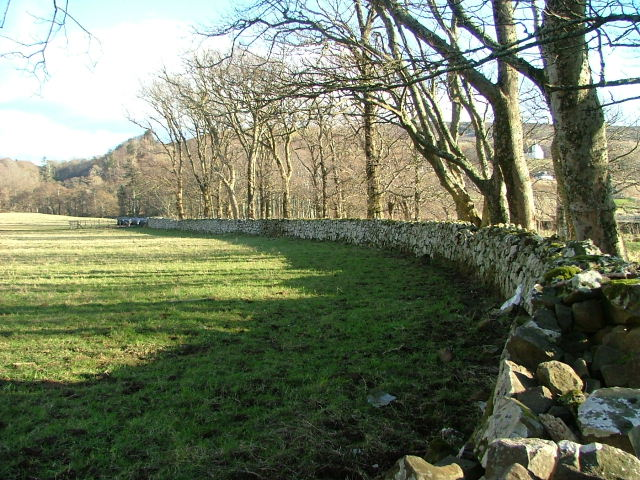 Drystone Wall and Trees