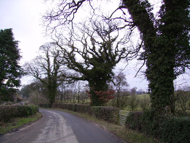 Roadside Trees