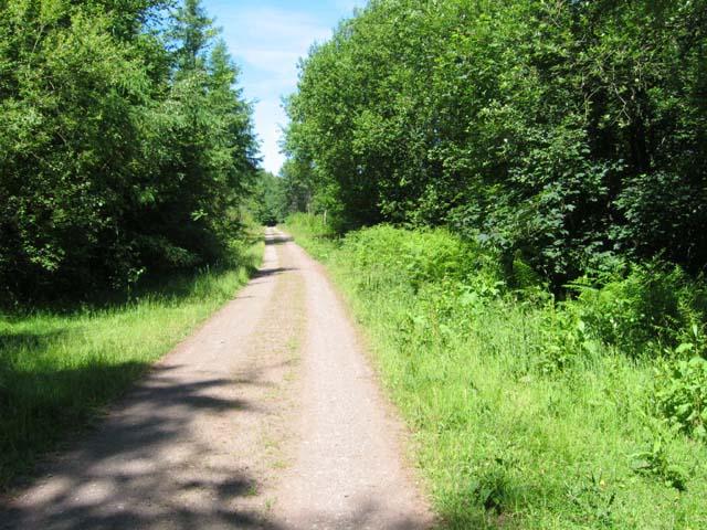 Forest road near Pont Rhys Powell