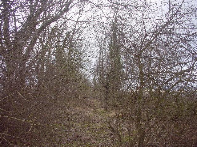 Tree belt