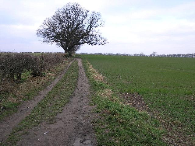 Bridleway To Owday Wood