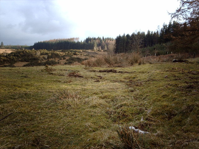 Ardoch Hill and Leapmoor Forest
