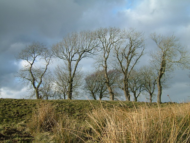 A proud stand of hilltop trees.