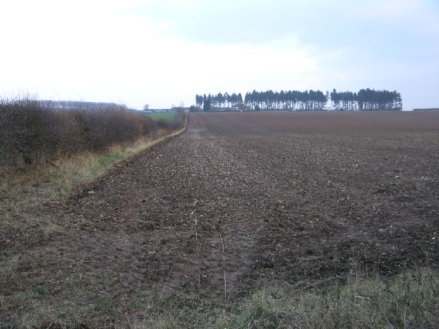 Fields to Hodsock Manor Farm