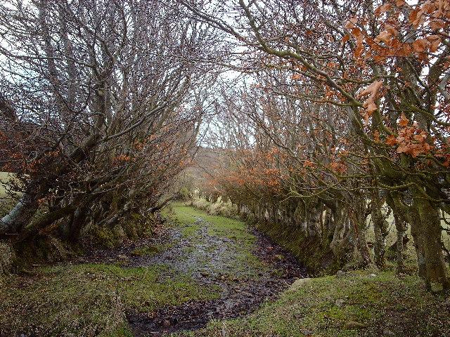 Old Track on Bargane Hill