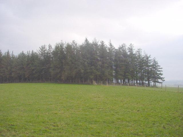 Small Plantation, Sceugh Hill
