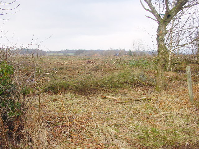 Cleared Plantation, Sceugh Wood