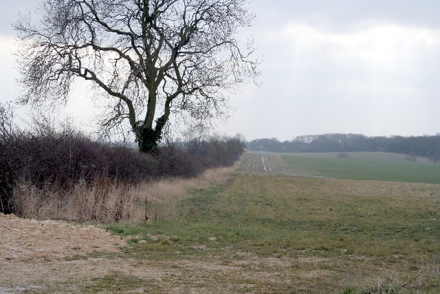 Field Boundary on Pickworth Plain