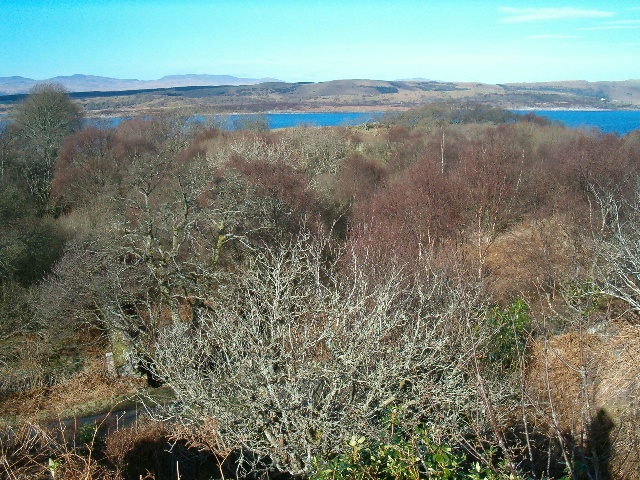 Woods near Creag Reidh