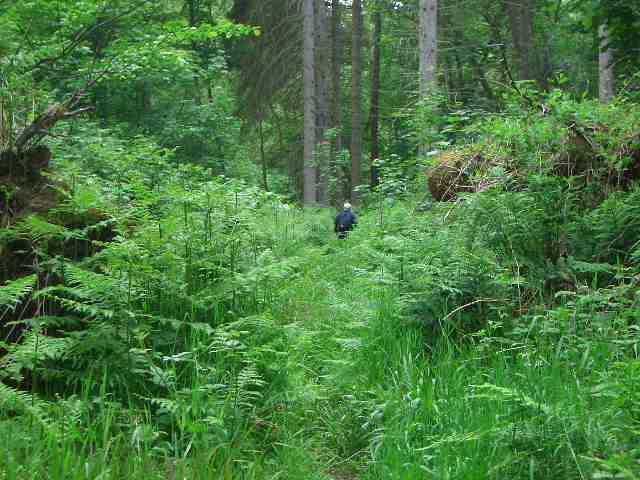Letah Wood, Hexhamshire
