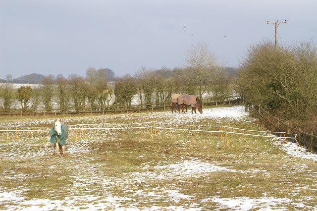 Coated Horses