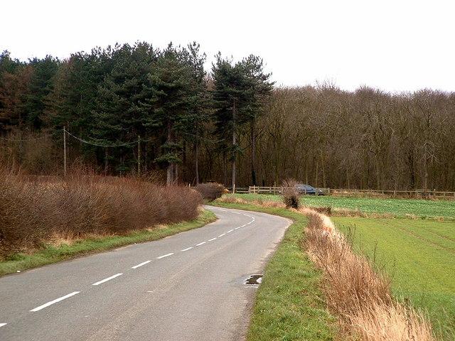 Melton Wood and Sheep Lane
