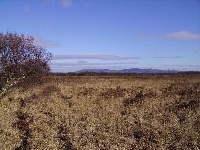 Winmarleigh Moss