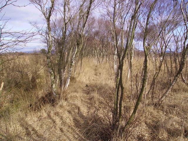 Path Crawley's Dyke